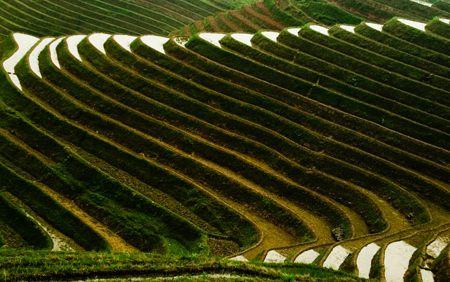 Rice terraces on the Dragon's Backbone, Ping'An Village, China. Seth Rosenblatt (c) 2006