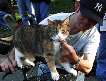 cat-on-leash.jpg