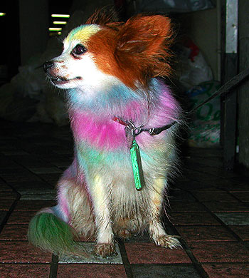 A dog of a different color, frequently seen at Nakano Station's North Exit.